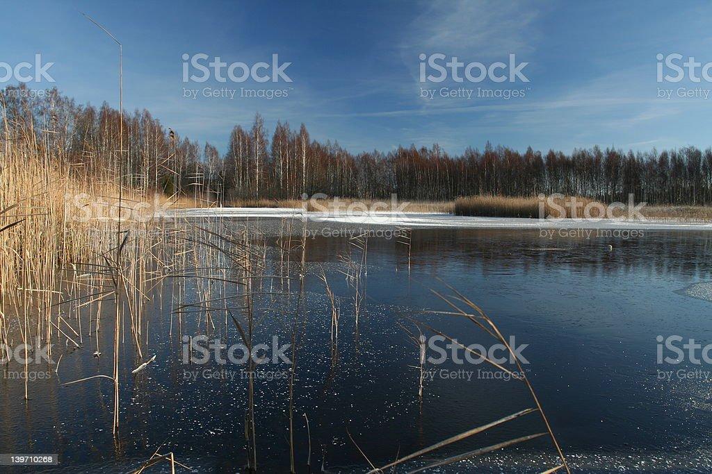 Frozen rushy lake stock photo