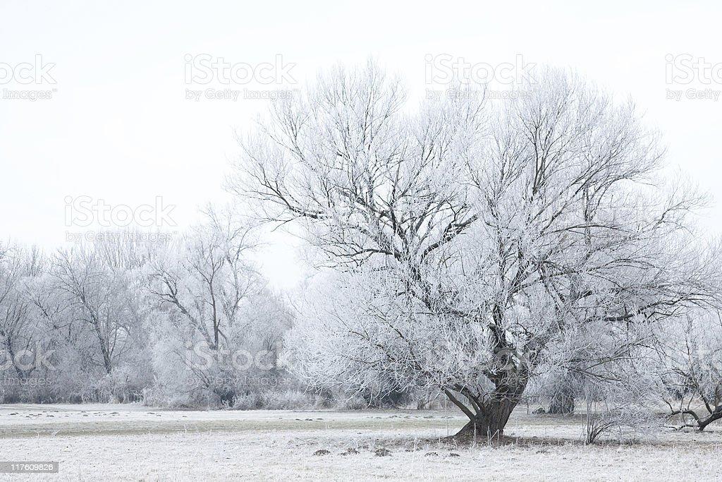 frozen scene royalty-free stock photo