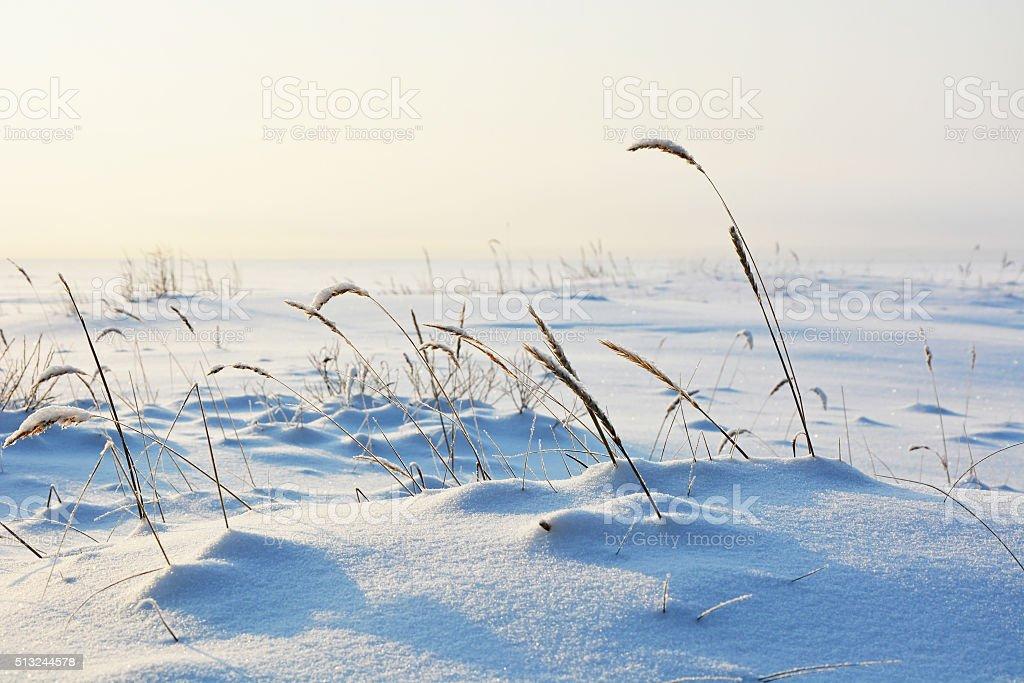 Frozen sea- polar landscape with plants stock photo