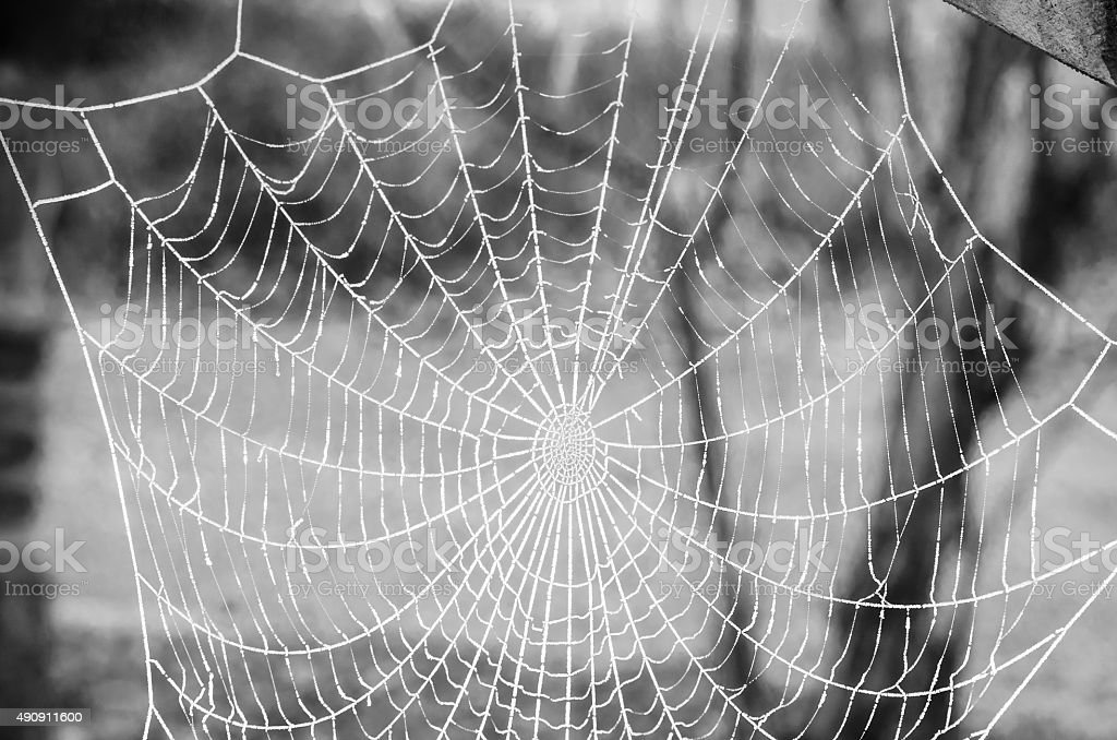 Frozen spider web in the morning in the garden stock photo