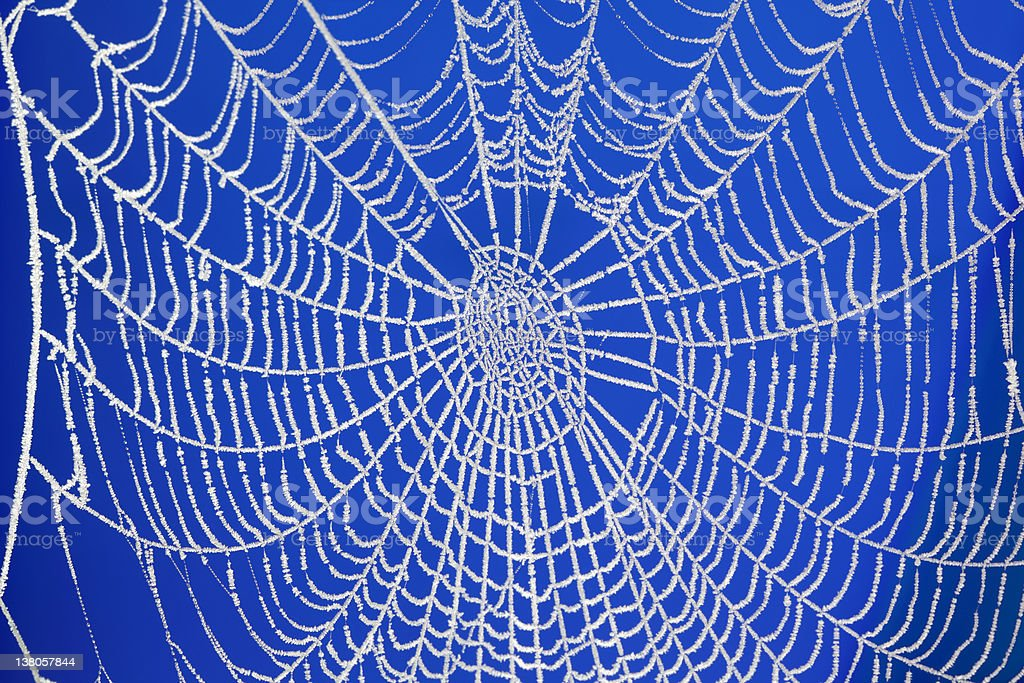 Frozen spider web royalty-free stock photo