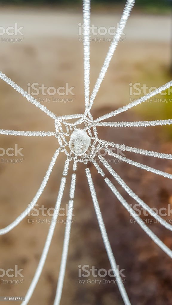 A frozen spiderweb. stock photo