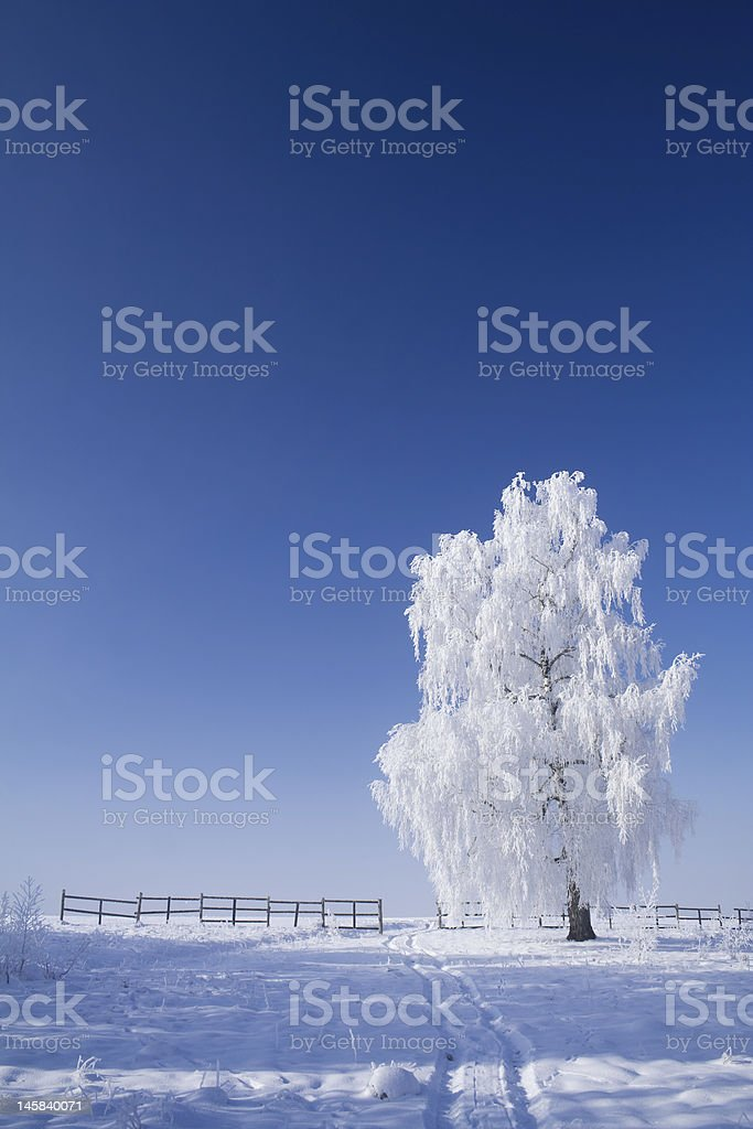 Frozen sunny day in mid winter royalty-free stock photo