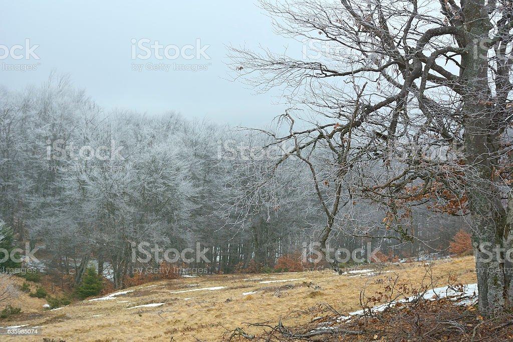 Frozen sunny day of a winter, on wild transylvania hills. stock photo