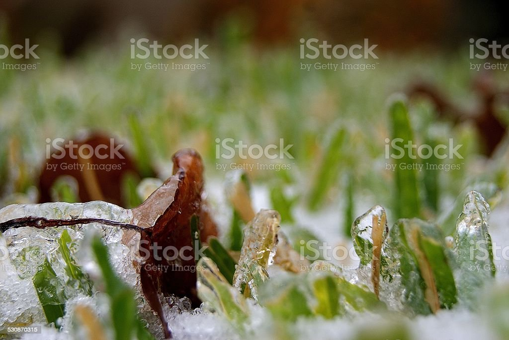 Frozen Together royalty-free stock photo