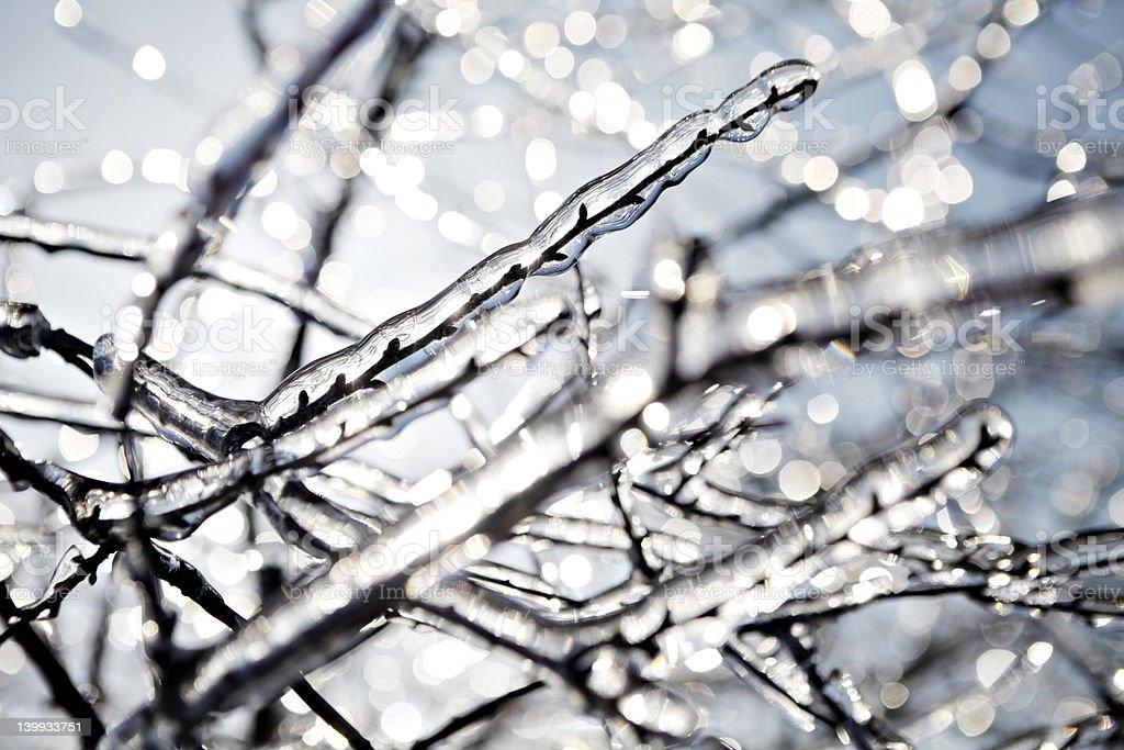 Frozen tree branch royalty-free stock photo