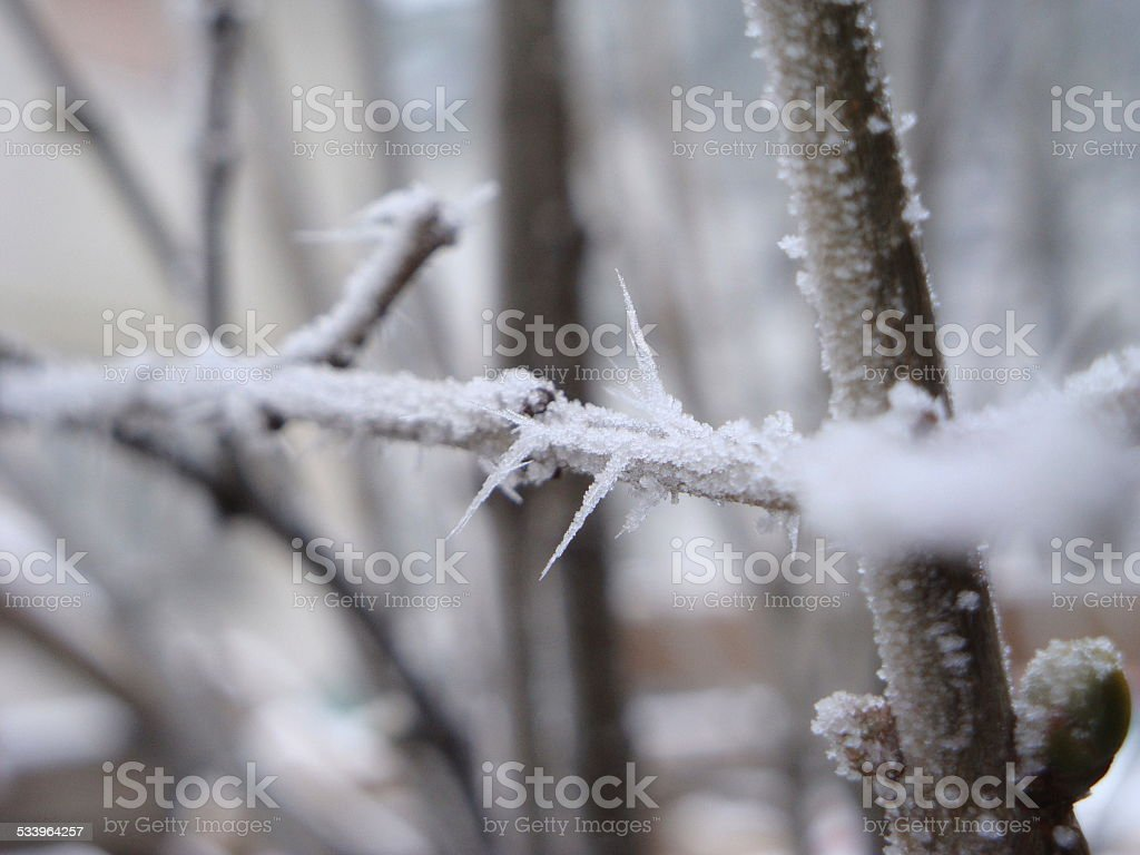 Frozen Tree Branch stock photo
