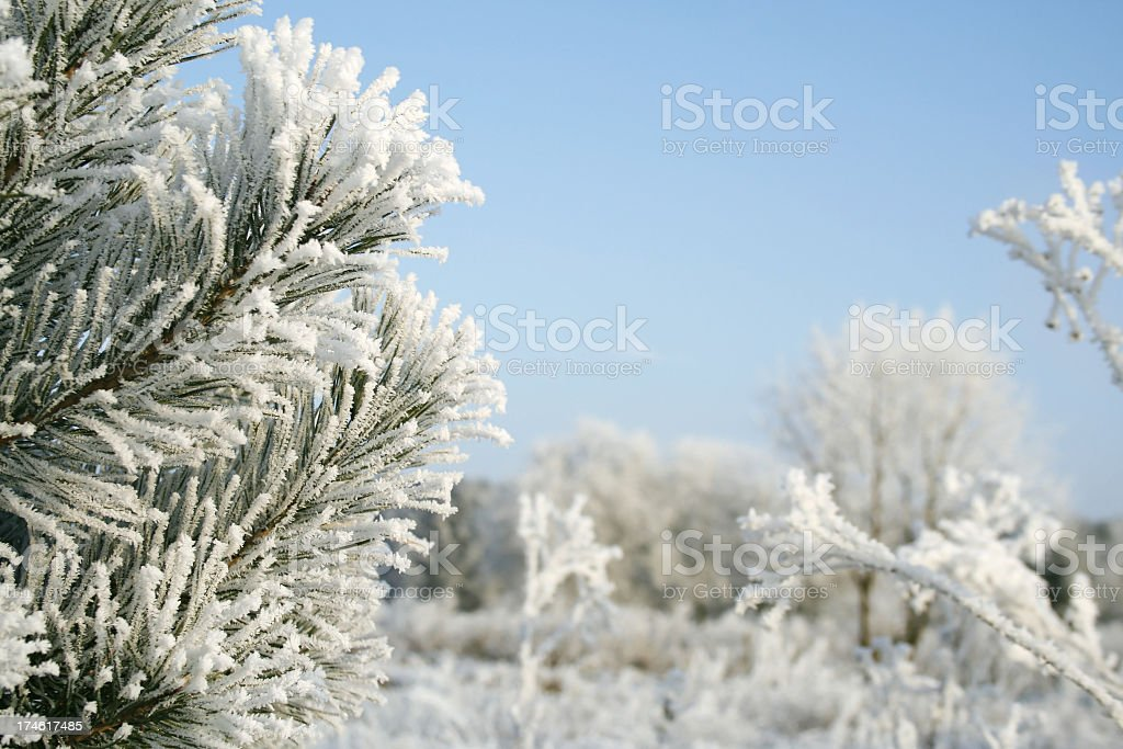 Frozen tree royalty-free stock photo