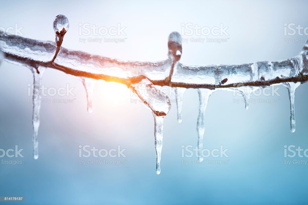 Frozen Tree stock photo