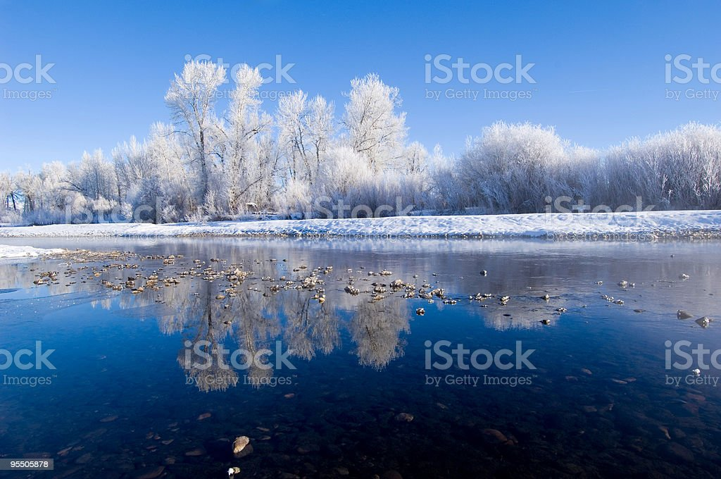 Frozen Tree River Reflection royalty-free stock photo