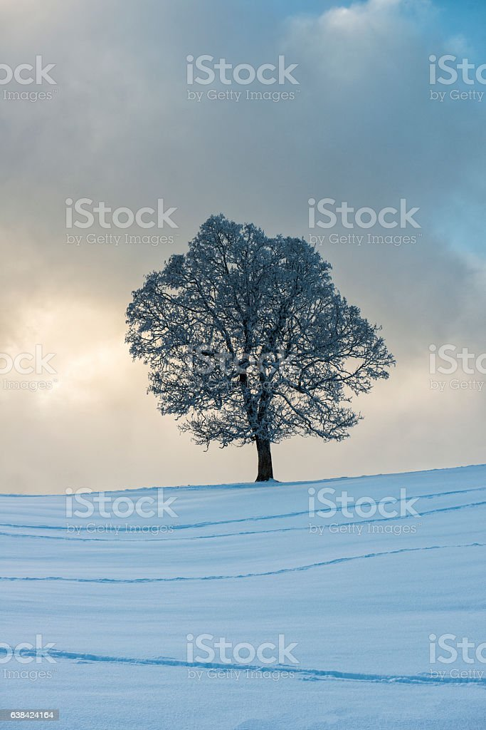 frozen tree with dramatic sky on snowy hill stock photo