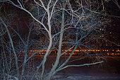 Frozen Trees In City