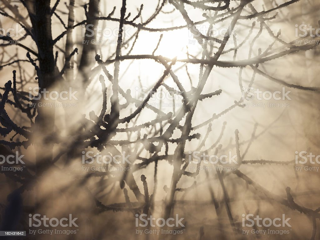 Frozen trees in sunlight royalty-free stock photo
