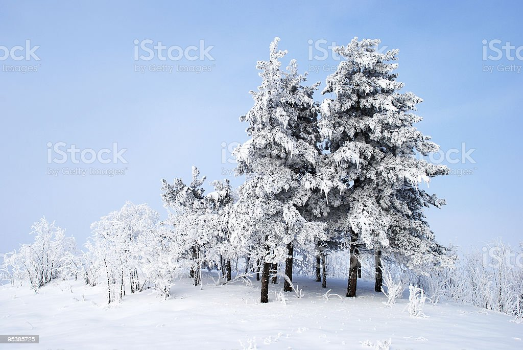 Frozen trees royalty-free stock photo