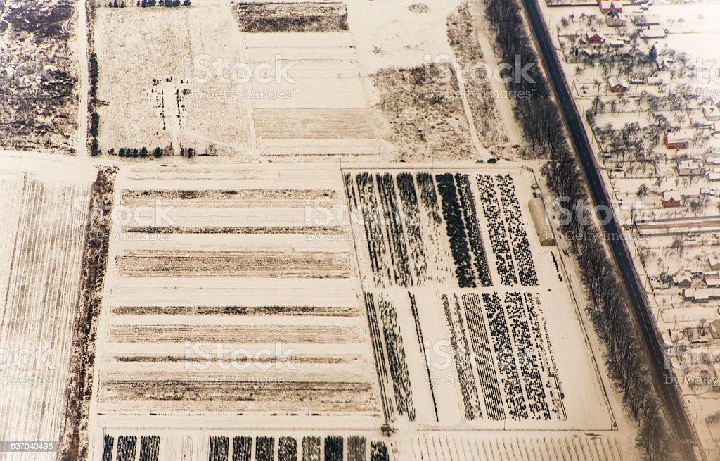 frozen vegetable plant fields at winter snow in lviv ukraine stock photo