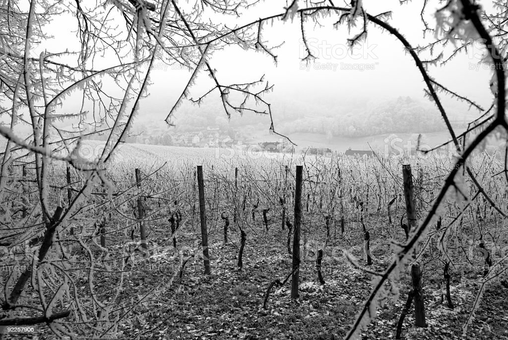 Frozen Vineyards royalty-free stock photo
