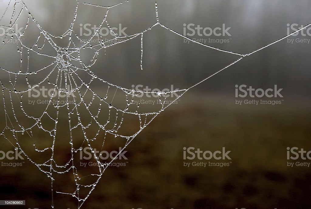 Frozen Web stock photo