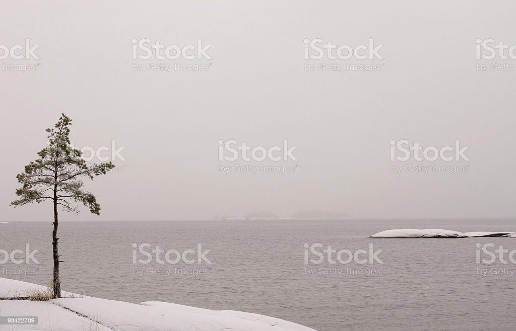 frozen winter tree royalty-free stock photo