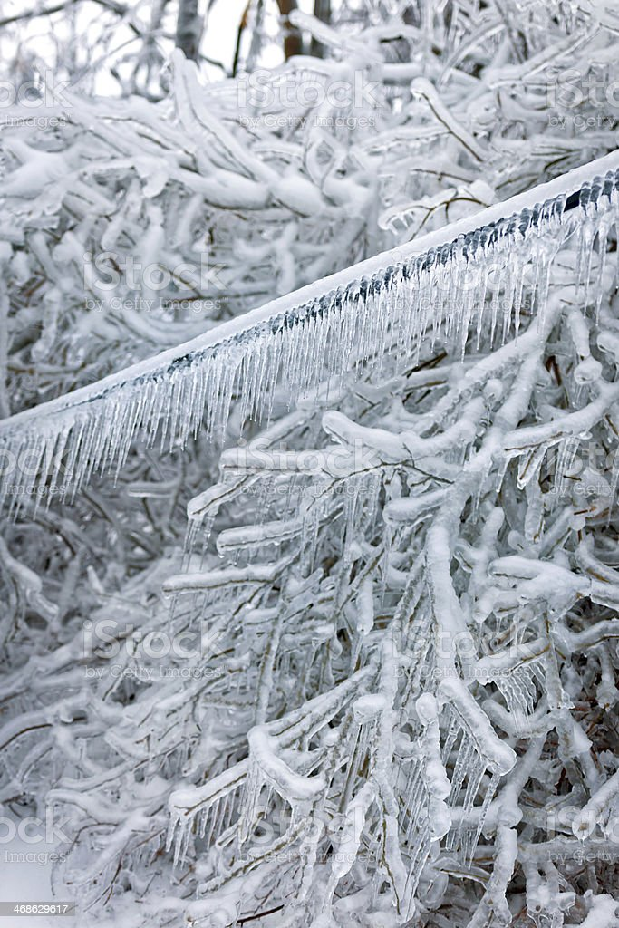 Frozen Wire and Branches royalty-free stock photo
