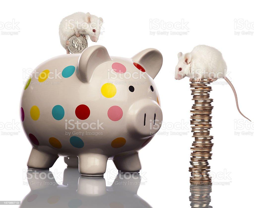 Frugal White Mice Family Saving Money, Filling Piggy Bank stock photo