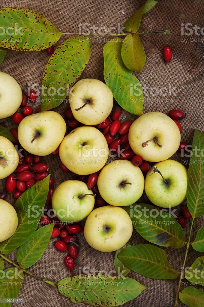 fruit, apples, red dogwood royalty-free stock photo