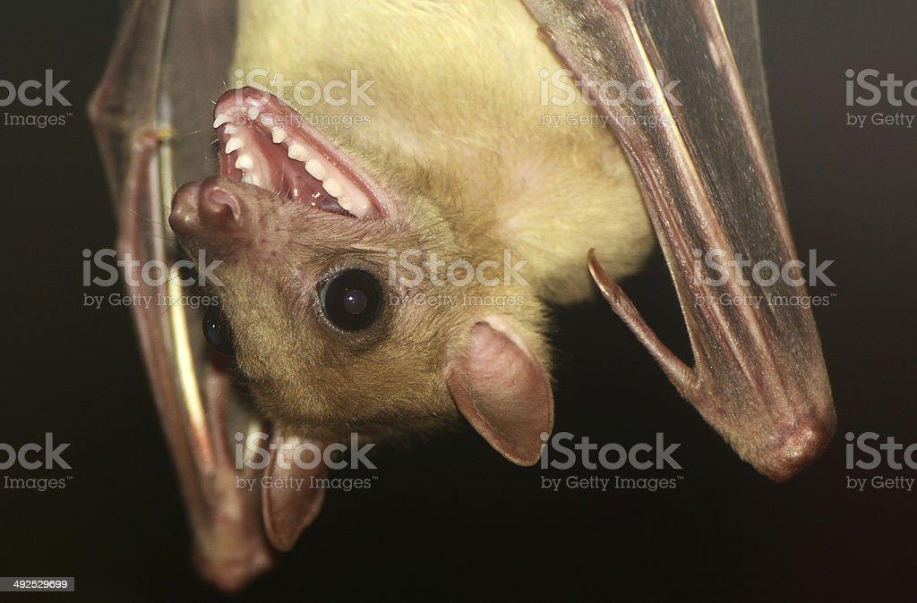 Вверх ногами в рот фото 488-921