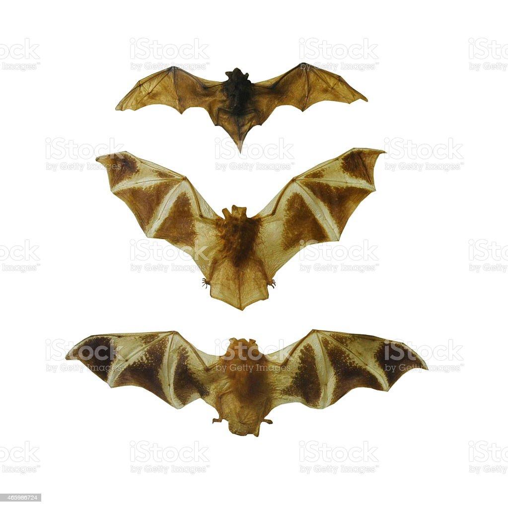 fruit bat set isolated on white stock photo