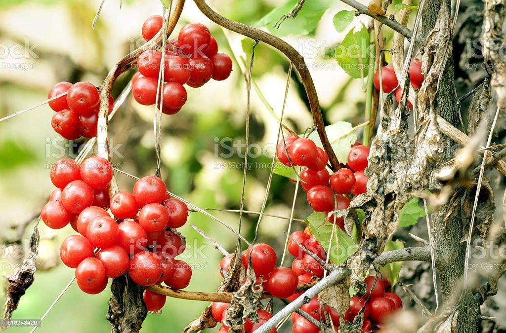 fruit Bray stock photo