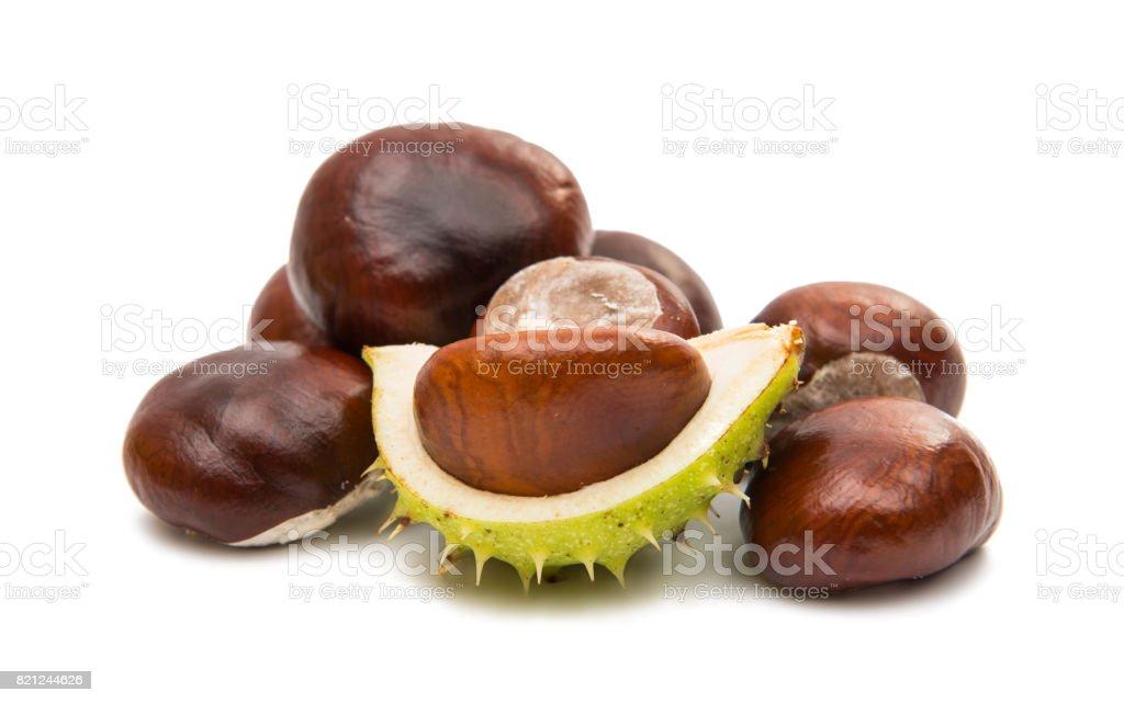fruit chestnut stock photo