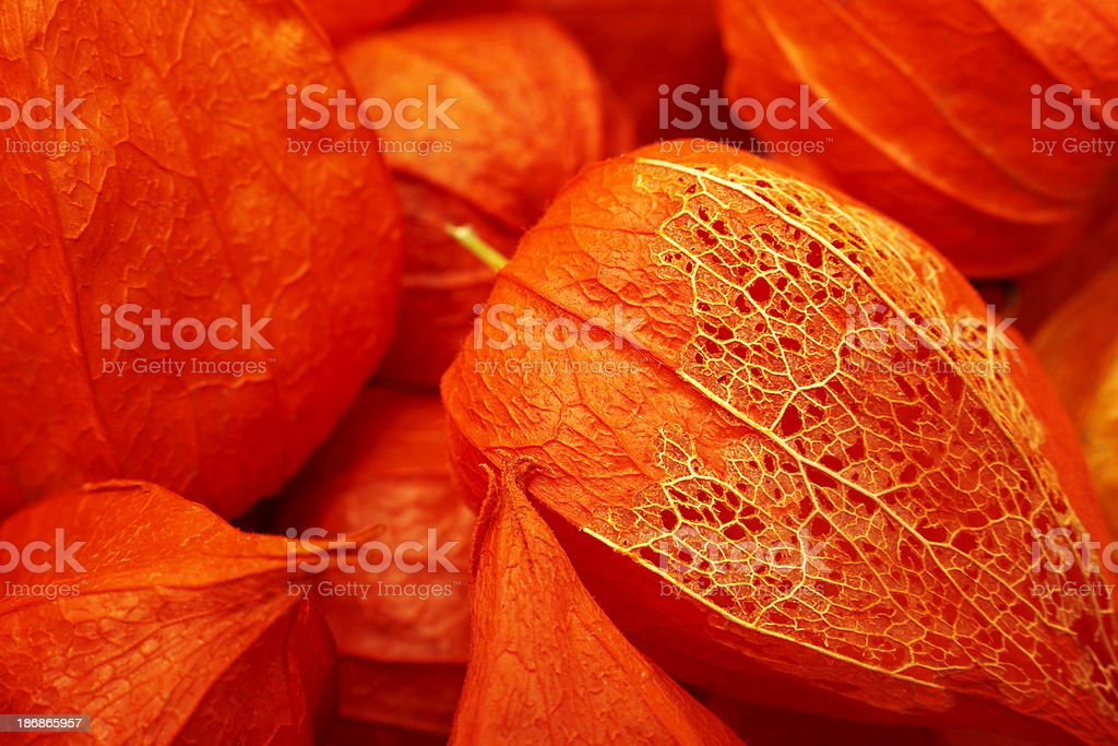 Fruit. Color Image stock photo
