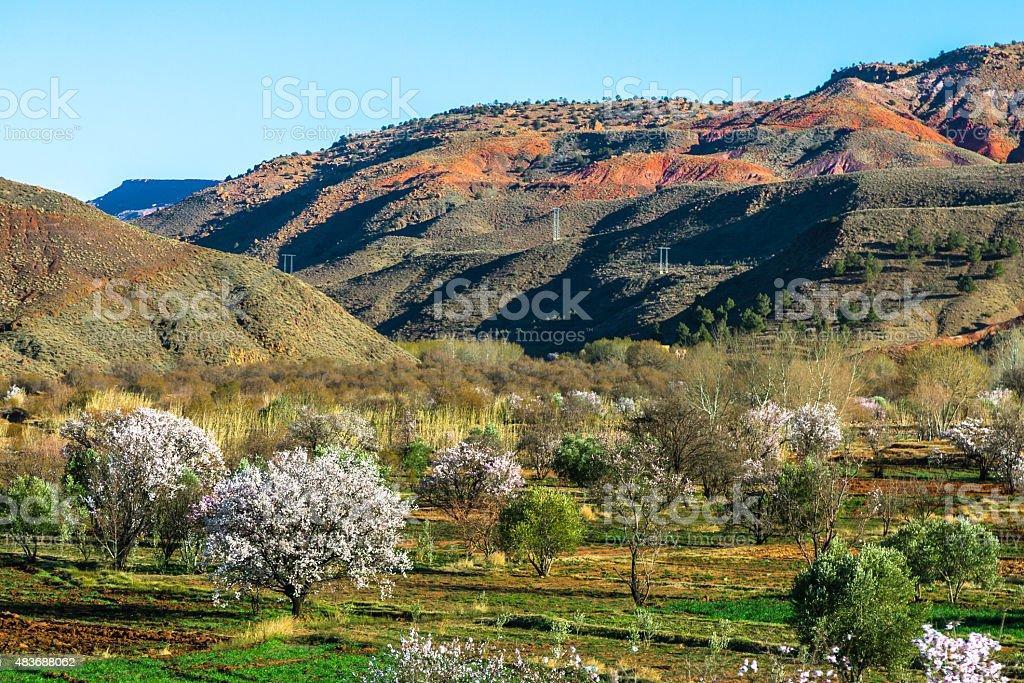 Fruit Farm in the Mountains stock photo