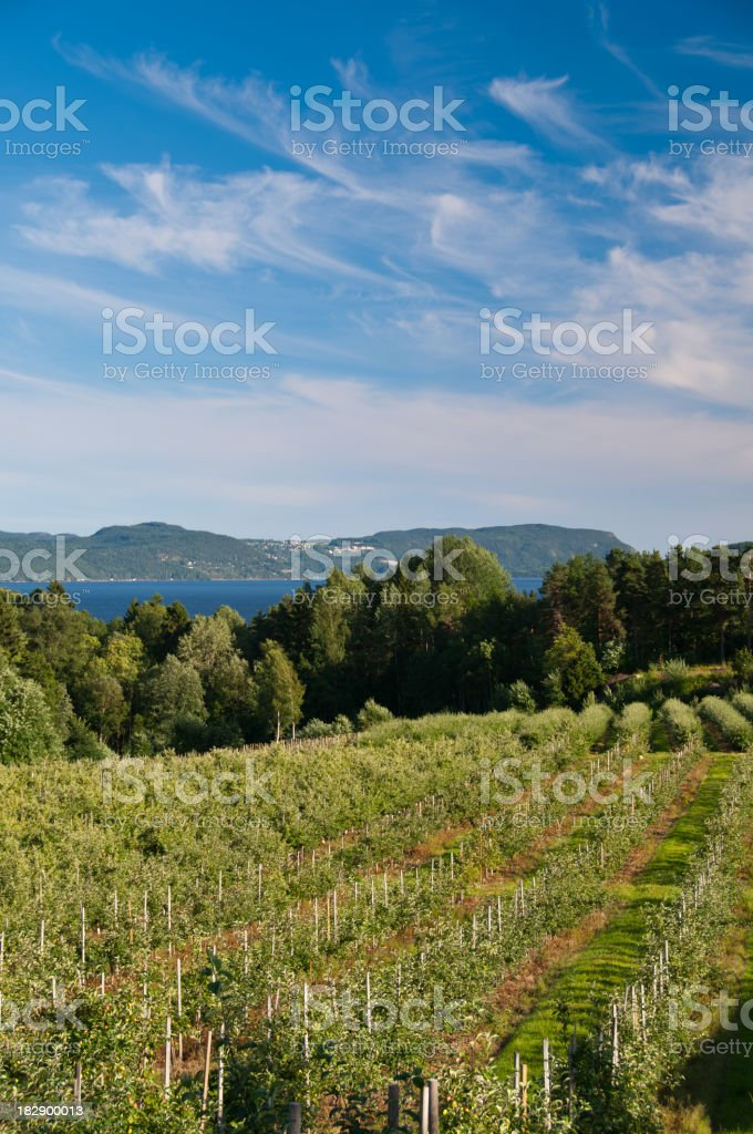 Fruit farm with fjord in background royalty-free stock photo