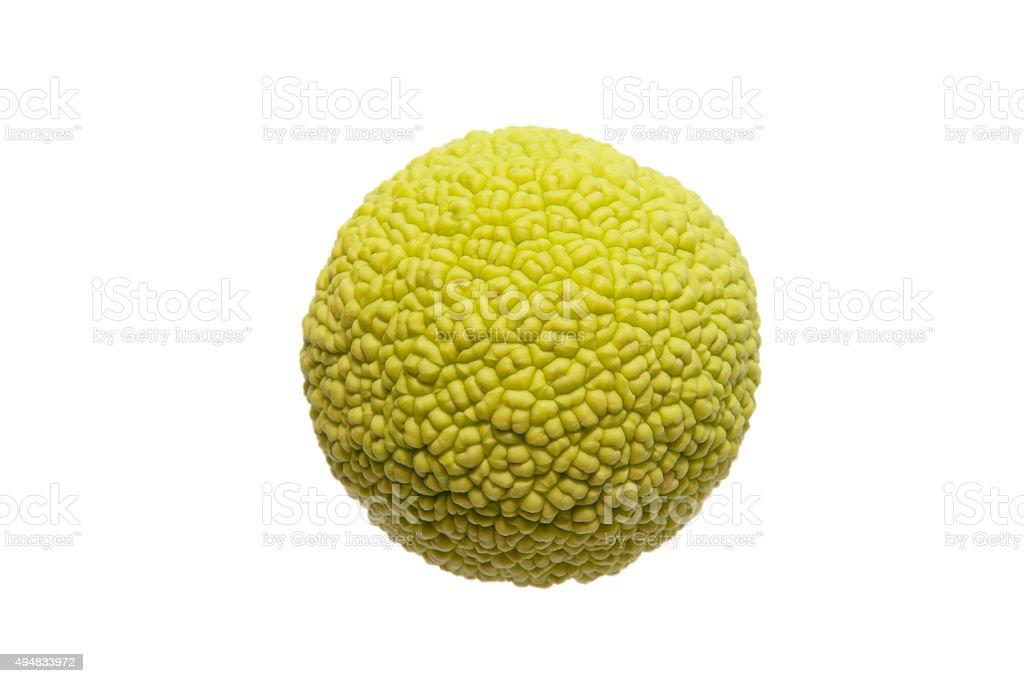 Fruit of maclura pomifera on a white background stock photo