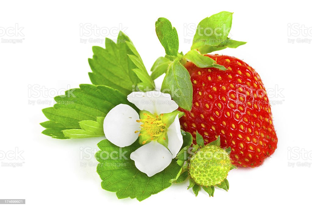 fruit of red strawberry isolated royalty-free stock photo