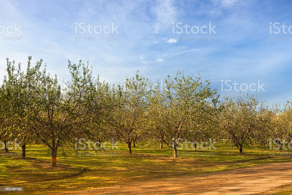 Fruit orchard at harvest time royalty-free stock photo