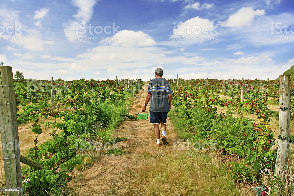 Fruit Picker royalty-free stock photo