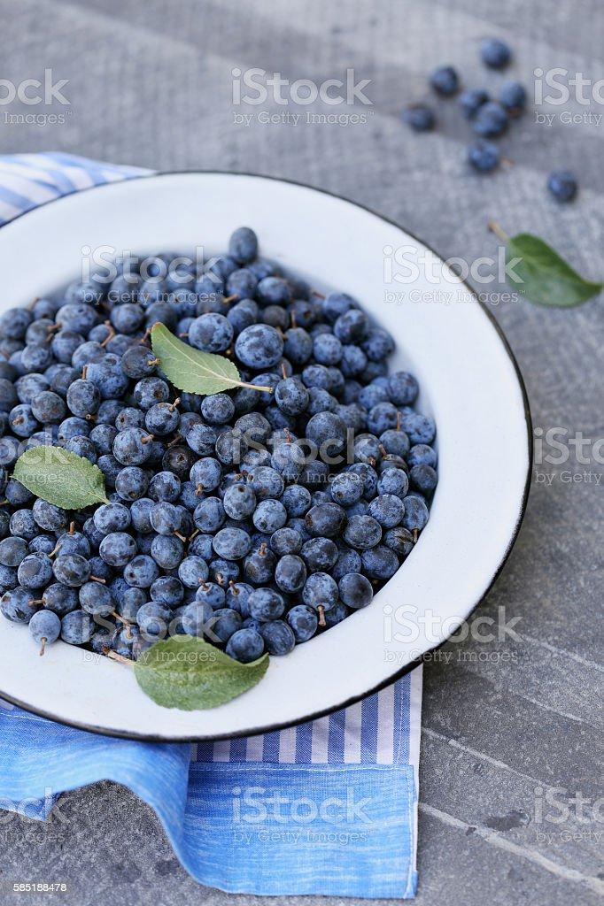 fruit Prunus spinosa stock photo