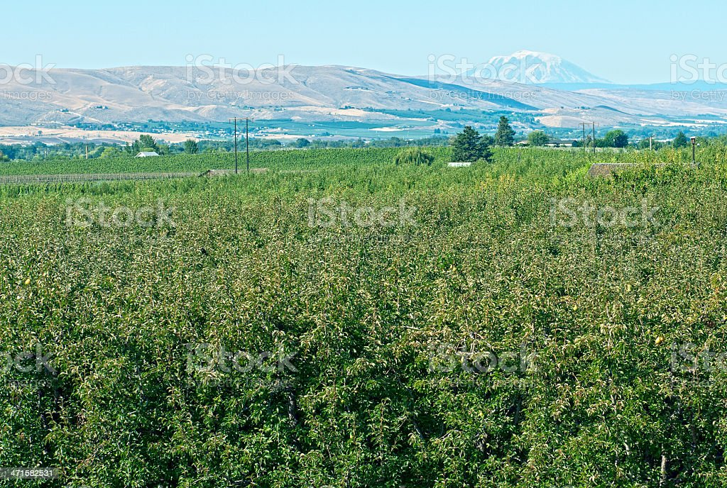 Fruit tree orchards in Yakima Valley WA stock photo