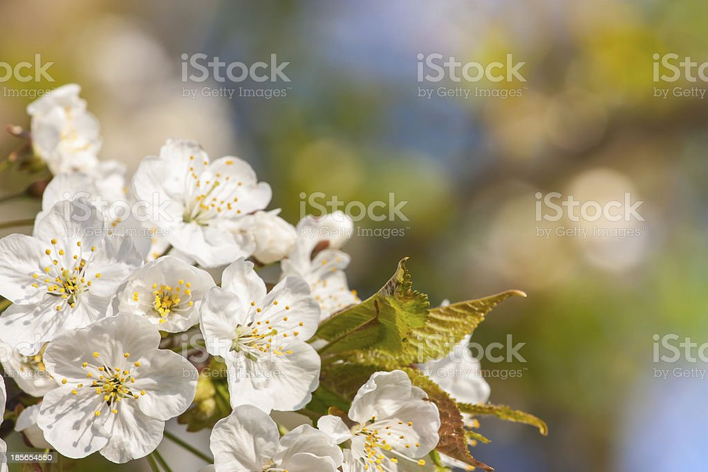 fruit tree stock photo