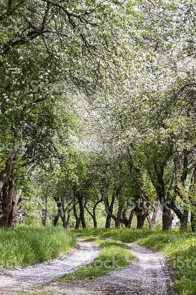 Fruit trees in a spring orchard stock photo