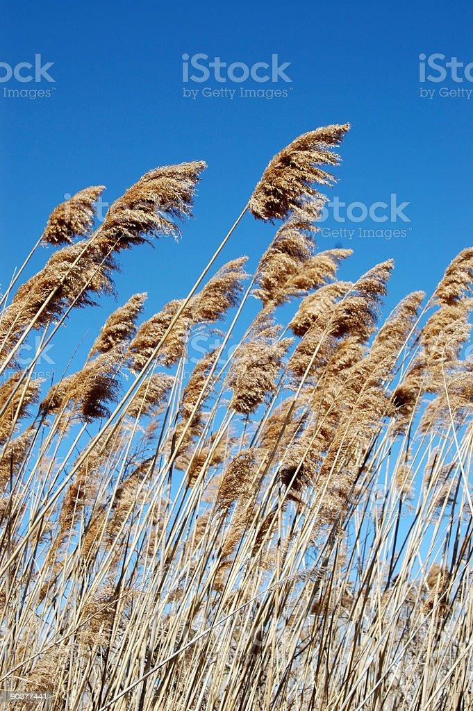Плодотворное Болото Трава Стоковые фото Стоковая фотография