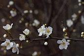 fruits blossom