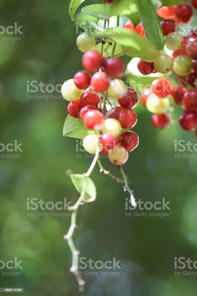 Fruits in Autumn stock photo