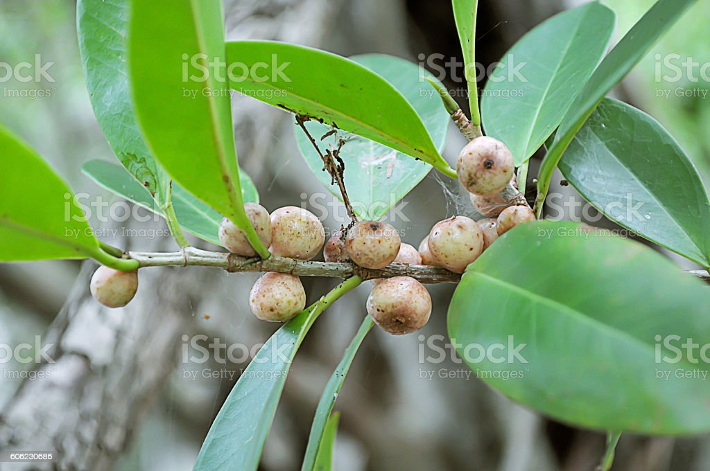 Fruits in wild for background stock photo