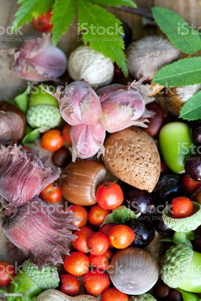fruits of fall stock photo