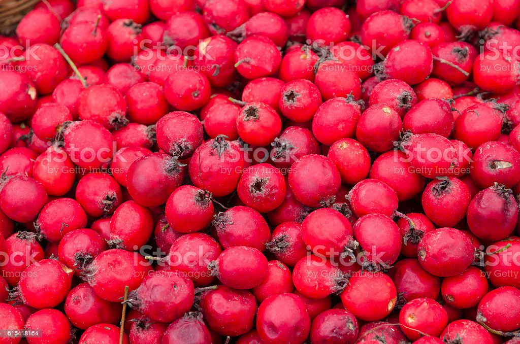 Fruits of Hawthorn ordinary (lat. Crataegus laevigata), background stock photo