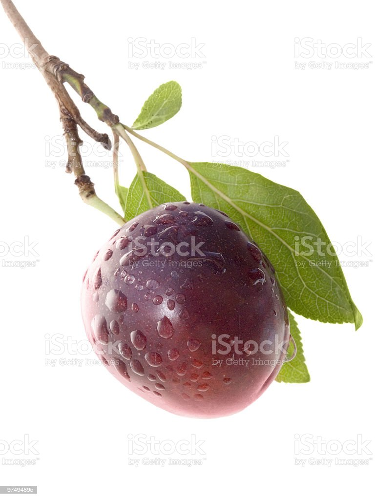 Fruits ripe violet sweet plums royalty-free stock photo