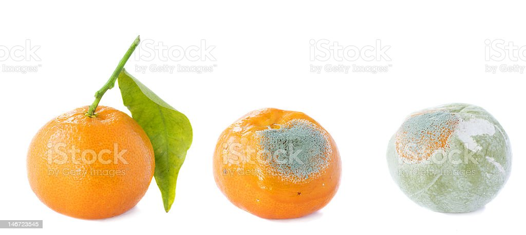 Fruits , tangerine, going bad with mold royalty-free stock photo