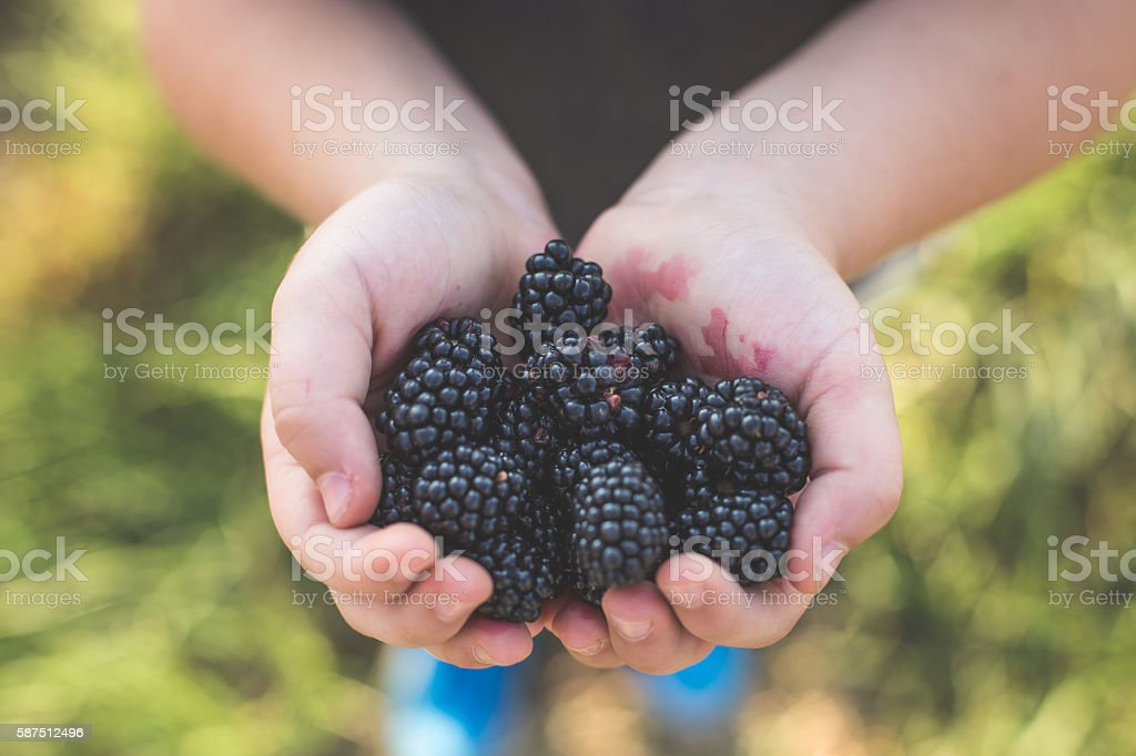 Fruity delights stock photo