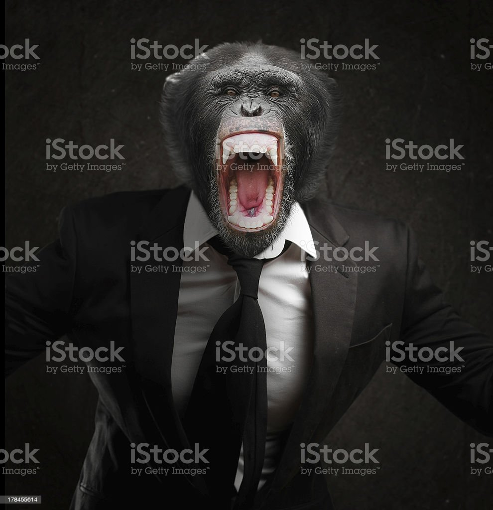Frustrated Monkey In Business Suit stock photo